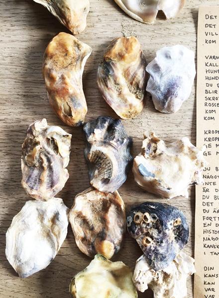 Forfatterlinjen Vadehavet 2019