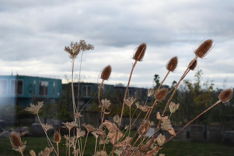 Refshaleøen Amass Det Levende Bord Johan Borups Højskole