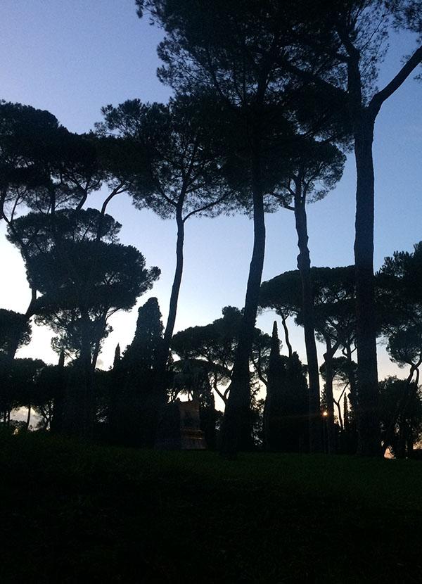 Peter Laugesen træer solnedgang nye rejsende
